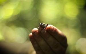 amphibian-bg-1680x1050