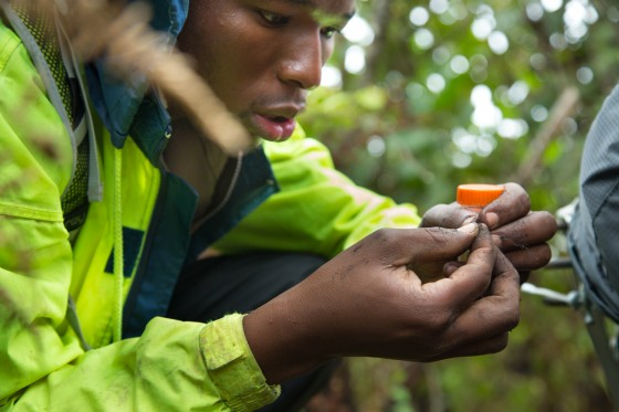 Entomologist Caswell Munyai with a new ant find on Mt. Namuli, Mozambique